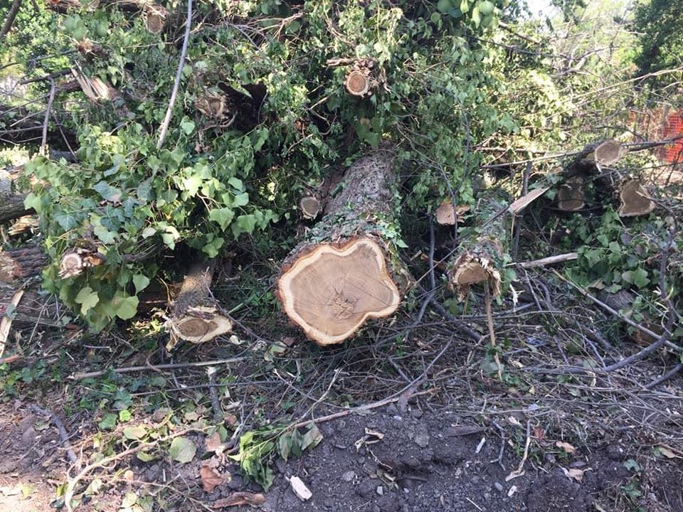 Ai Prati di Caprara si abbattono gli alberi, la nostra domanda al Sindaco Merola