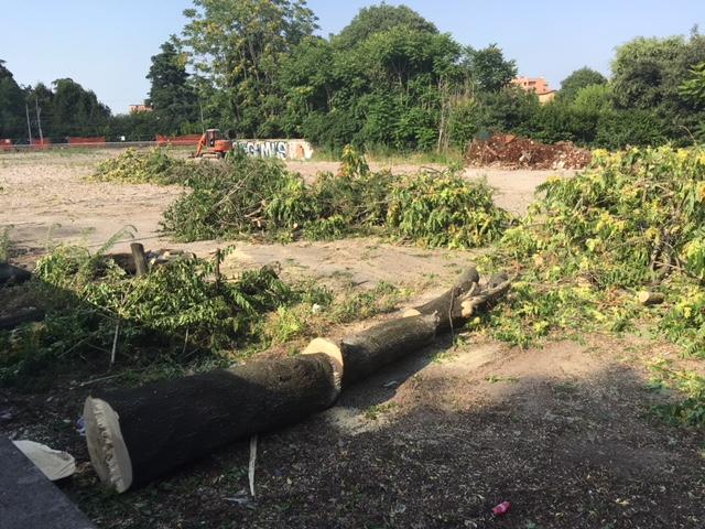 In via Libia stanno tagliando gli alberi. Sono iniziati i lavori del supermercato Lidl?