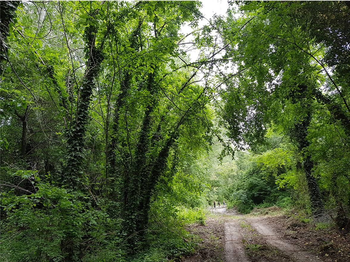 Il bosco ineludibile.  Prima giornata dell'istruttoria pubblica sui Prati di Caprara