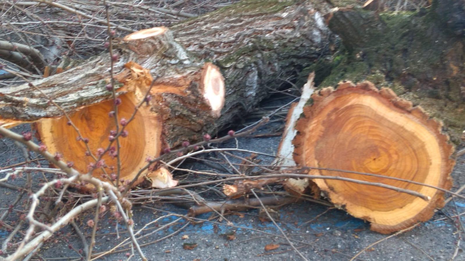 Via Bentivogli: perché tagliare gli alberi non era l'unica soluzione