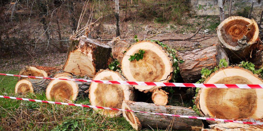 abbattimento alberi Prati di Caprara 2 Marzo 2020