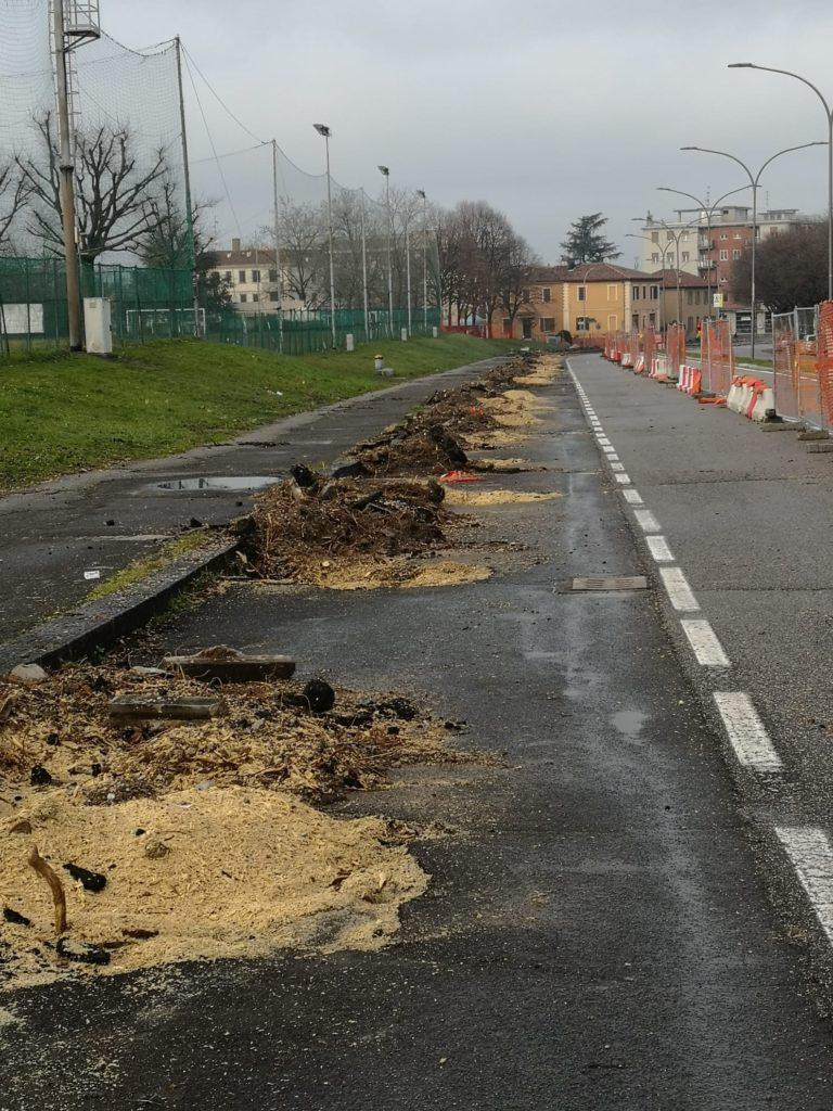 Abbattimento alberi via Torino
